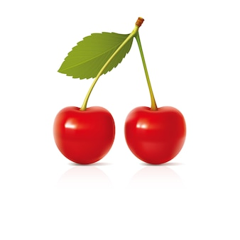 Cherry vector design illustration template