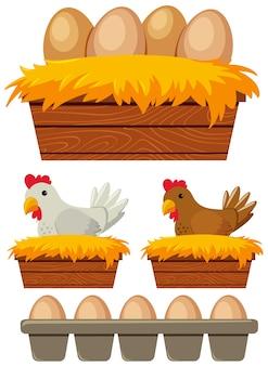 Курица и яйца в гнезде