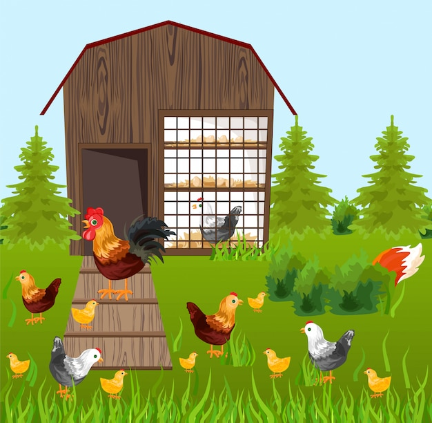 Chicken coop on green farming background