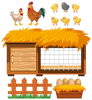 Chicken coop and many chickens on white background