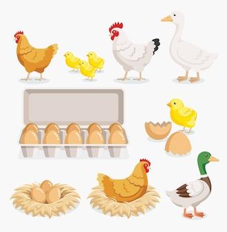 Курица, утка, упаковка куриных яиц и куриные яйца на гнездах.
