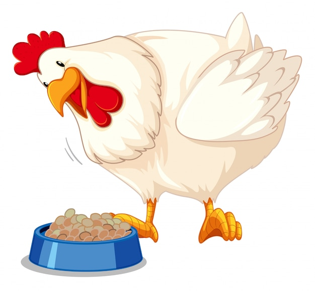 A chicken eating food