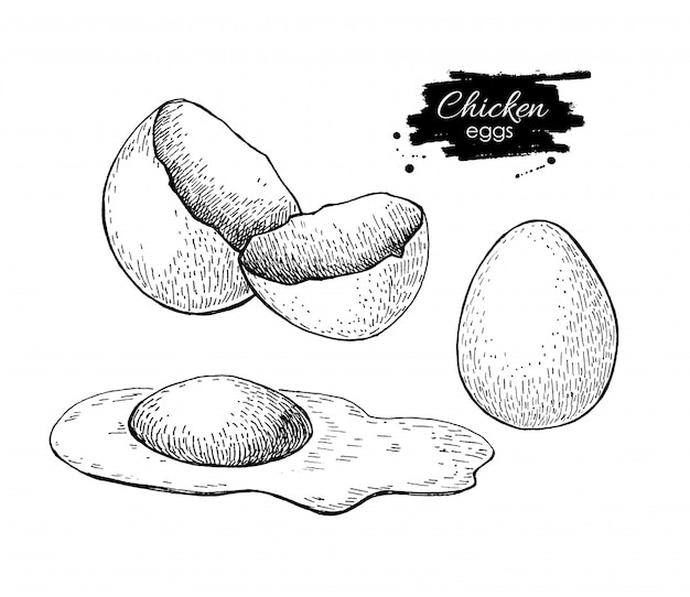 Chicken egg drawing