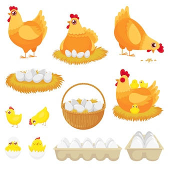 Chicken eggs, hen farm egg, nest and tray of chickens eggs cartoon   set