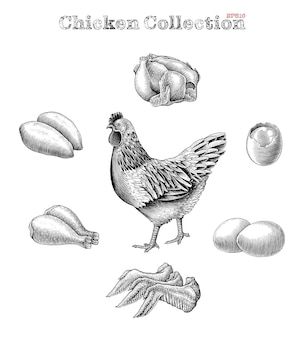Chicken elements black and white set in engraving style