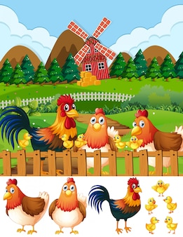 Chicken family at farmland
