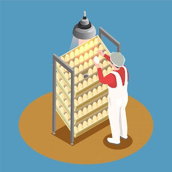 Chicken farm isometric design concept with incubator rack and employee looking through chicken eggs