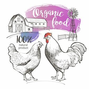 Chicken hen rooster cock cockerel and farm
