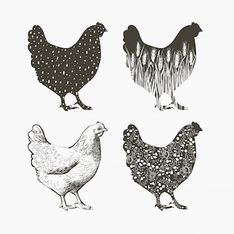 Chicken logo. vector illustration in vintage style