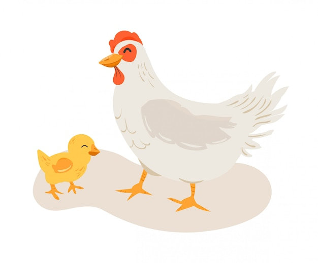 Chicken mother and his chick