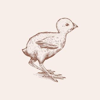 Цыпленок или птичка с фермы. гравировка рисованной старинный эскиз. стиль гравюры на дереве. иллюстрация для меню или плаката.