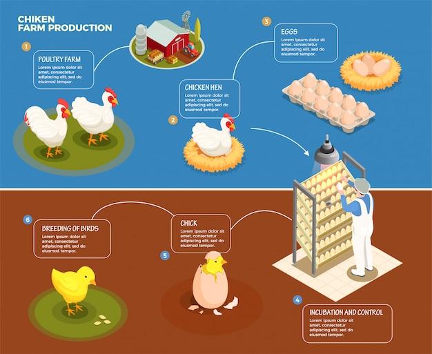 Schema graduale della produzione di pollo dall'allevamento avicolo al controllo dell'incubazione e all'allevamento dell'illustrazione isometrica del pulcino