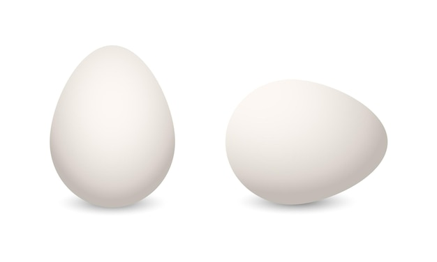 鶏のリアルな卵。イースター休暇のテンプレートは、白い背景で隔離します。調理用ベクトルイラスト白い単一動物の卵