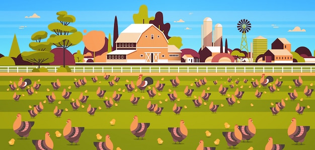 Chicken and rooster free range feeding time farming breeding hed for food poultry farm field farmland countryside landscape