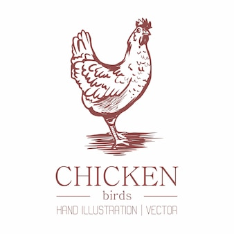 Chicken. vintage style. hand drawing.