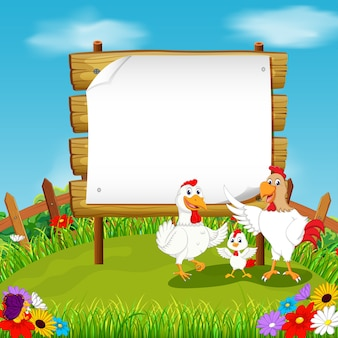 Chicken with blank paper background