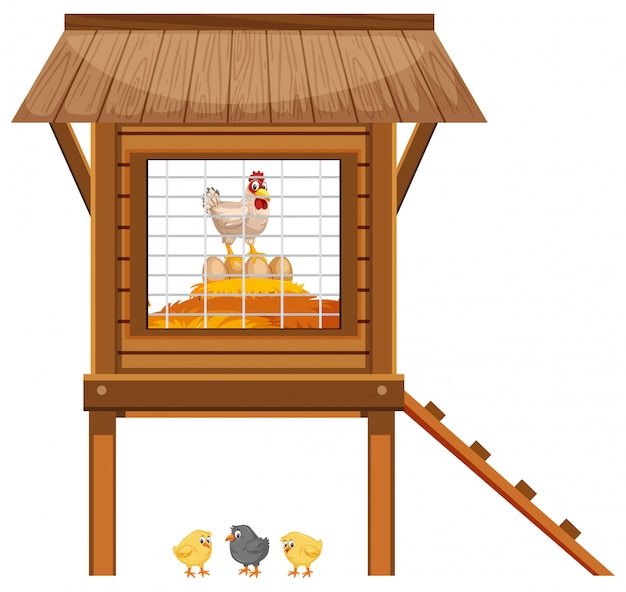 Chickens in the chicken coop on white background