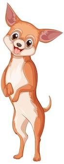 白い背景の上のチワワ犬の漫画