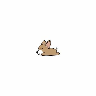 Chihuahua dog sleeping