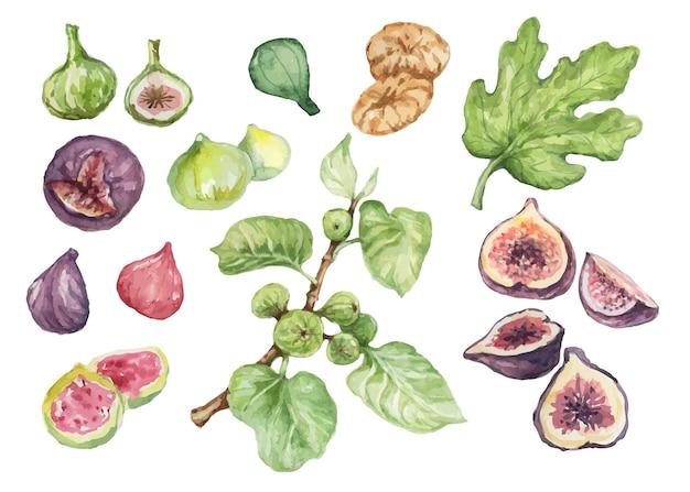 Чили перец специи акварель рисованной иллюстрации бесшовные набор фон острая еда
