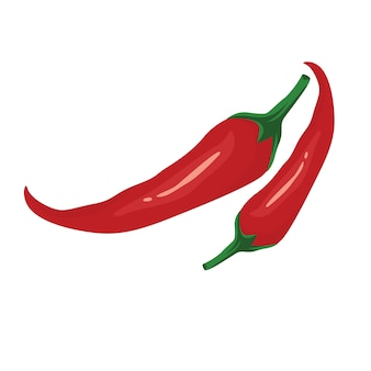 Chili red pepper vector