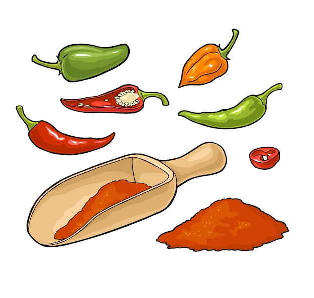 Chilli whole, half, slice and crushed pieces in wood scoop. vintage color illustration. isolated on white background.