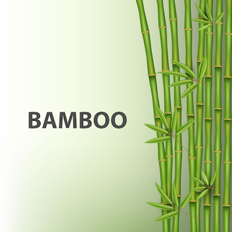 Chinese bamboo grass tree. tropical asian plant.