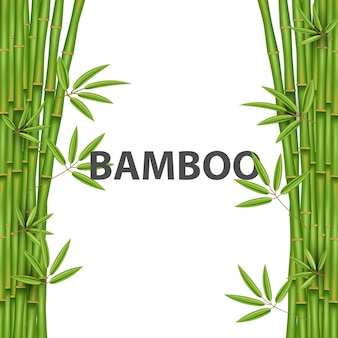 Chinese bamboo grass tree