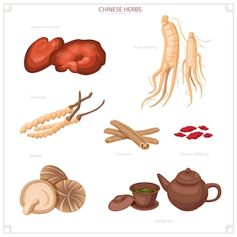 한약, 인삼, reishi, 동충하초, 표고 버섯, 차.