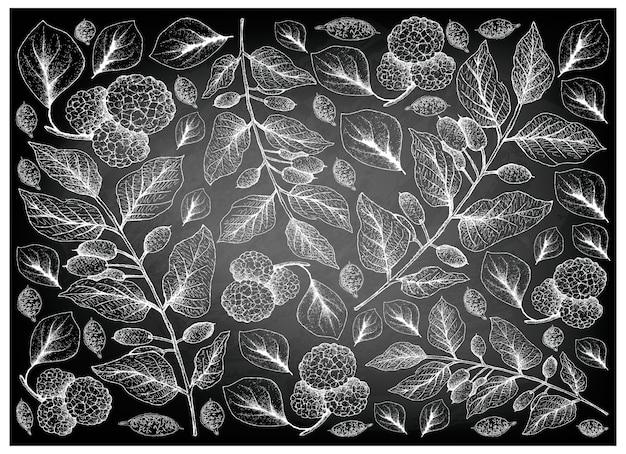 Chinese mulberries and canarium subulatum guillaumin