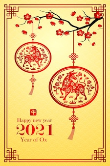 Chinese new year 2021 card is ox in lantern and chinese word mean ox