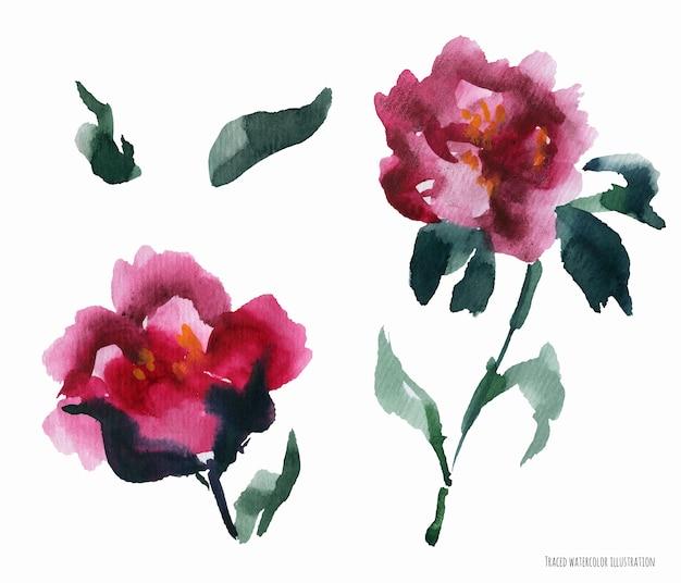 Китайский пион розовые цветы, абстрактное искусство акварели