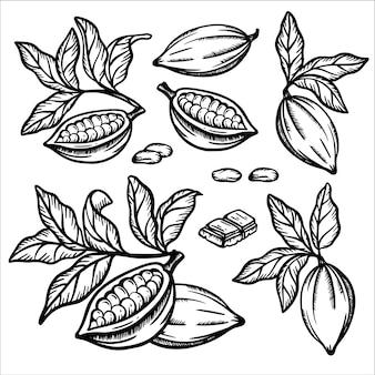 초콜릿 코코아. 과일 씨앗은 테 오브 로마 나무의 가지를 남깁니다. 빈티지 스타일의 흑백 디자인 스케치. 손으로 그린 클립 아트 그림 세트
