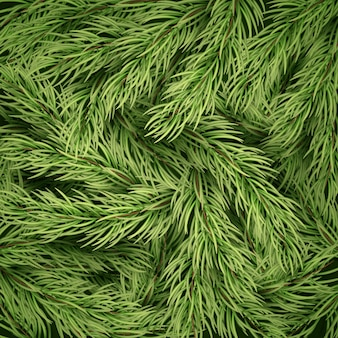 Christmas background from fir tree branches.