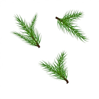 Christmas branches vector