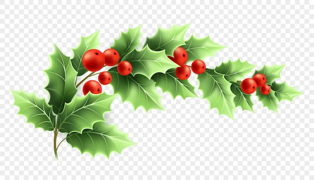 クリスマスのヒイラギの枝のリアルなイラスト。透明な背景に緑の葉と赤いベリーと三日月形の小枝。装飾的なクリスマスのヒイラギ。ポスターデザイン要素。色分離ベクトル