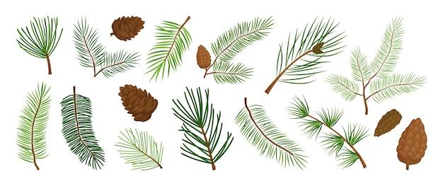 크리스마스 소나무 가지와 원뿔, 상록수, 전나무, 삼나무 나뭇가지 벡터 아이콘, 겨울 식물, 새해 나무, 휴일 장식. 손으로 그린