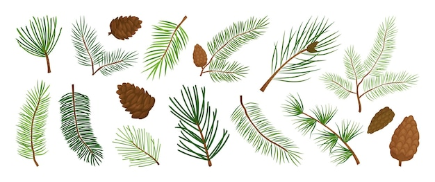 Christmas pine branch and cone, evergreen tree, fir, cedar twig vector icon, winter plants, new year wood, holiday decoration. hand drawn