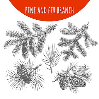 Christmas pine, fir tree branches and cones sketch