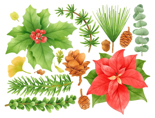 Illustrazioni degli elementi della decorazione delle piante di natale stili dell'acquerello