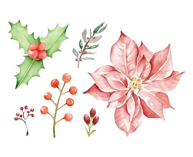 クリスマスの植物。ポインセチアの花、ヒイラギ、装飾的な枝
