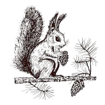 クリスマスのリスと森のモミの実を持つ動物。冬休み。刻まれた手はがきの古いスケッチとビンテージスタイルで描画されます。新年のシンボル。