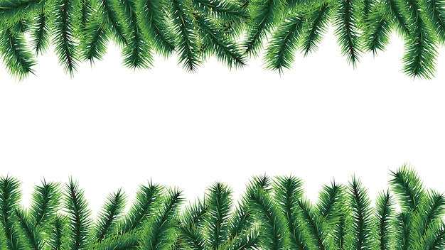 Christmas tree border. fir tree branches isolated on white background. illustration branch evergreen frame, pine-tree xmas twig