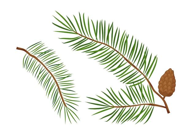 크리스마스 나무 가지, 전나무와 솔방울, 상록수 세트. 자연 그림