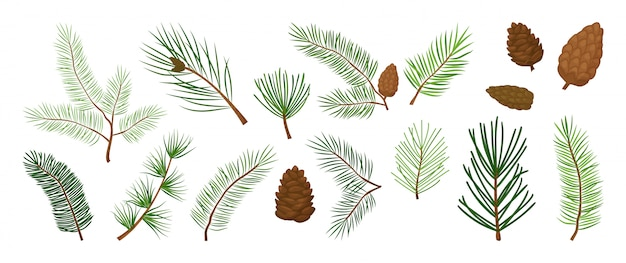 Елочные ветви, еловые и сосновые шишки, вечнозеленый векторный набор, праздничные украшения, зимние символы. иллюстрация природы
