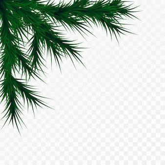 白い背景の上のクリスマスツリーの枝。松の木の装飾テンプレート。クリスマスフレームイラスト、テキスト用のスペース。