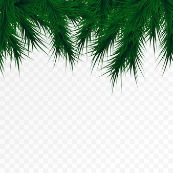 白い背景の上のクリスマスツリーの枝。松の木の装飾テンプレート。クリスマスフレーム、テキスト用のスペース。