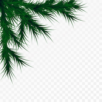 Christmas tree branches on white background. pine tree decoration template. christmas frame illustration, space for text.