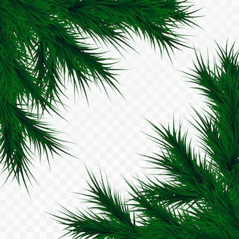 Christmas tree branches on white background. pine tree decoration template. christmas frame, space for text.