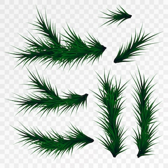 Christmas tree branches on white background. pine tree decoration template